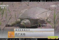 [农广天地]黄河鳖养殖技术视频