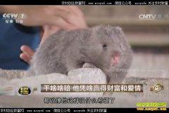 [致富经]广西平乐县何建忠养殖竹鼠赢得财富和爱情