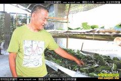 四川兴文县大沙坝村:种桑养蚕成农民致富好项目