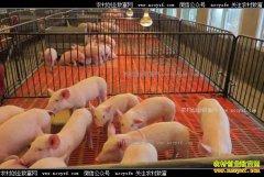 养猪赚钱吗?养30头猪一年能赚多少钱?