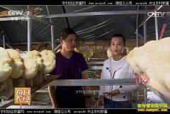 [每日农经]黑龙江海林:搬家以后的猴头菇更赚钱