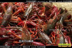[致富经]湖北公安县帅修武养殖小龙虾赚来亿万财富