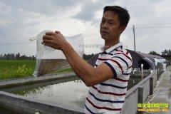 湖北宜城丁杰的泥鳅养殖致富梦