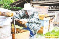重庆城口县曾能均养殖中蜂成致富带头人