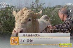 [农广天地]河南泌阳祁兴磊培育夏南牛技术视频