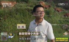 [致富经]福建何晓芳养猪、湖北贺根养牛致富经视频