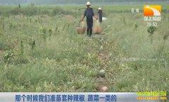 垄上行种植致富项目:果园套种西瓜效益高