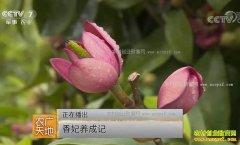 [农广天地]福建连城县饶春荣香妃培育技术视频
