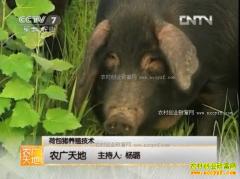 [农广天地]荷包猪养殖技术视频