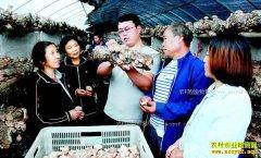 山西翼城县大学生侯东升回乡创业种香菇