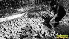 河北永清:合作养鸭富农家