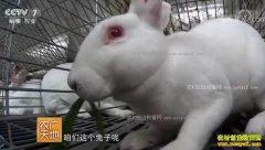[农广天地]江苏徐州张天君养獭兔年销千万元