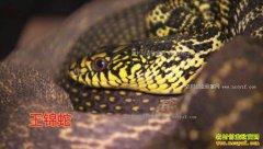[致富经]湖南汨罗周义伟一条腿支撑的养蛇财富