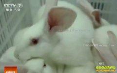 [科技苑]重庆沈代福掐着时间养兔子