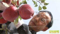 [致富经]河南唐河严文宝种植红色之爱红肉苹果年销500万