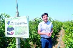 山东章丘窦广磊辞职回乡种树莓年收入200万