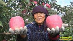 """[致富经]""""灰姑娘""""变美出山 甘肃庄浪县郭槿靠苹果轻松赚钱"""