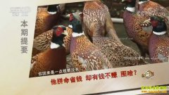 [致富经]湖南醴陵周伯平妙招养特禽成行业创业先锋