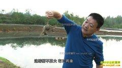 [致富经]河南淅川寇元钦泉里养螃蟹 3个月要捞2000万