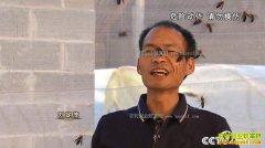 [致富经]云南盈江刘定茂养殖大虎头蜂2个月赚600万