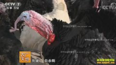[农广天地]养火鸡赚钱吗?江苏建湖县廖正军养火鸡靠文化赚钱