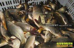 冷空气来袭 海产品和淡水鱼价格双双上涨