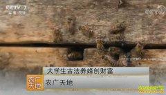 [农广天地]陕西勉县大学生刘义超古法养蜜蜂创造财富