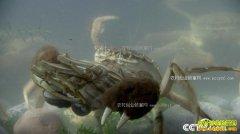 [致富经]重庆武隆90后女孩樊霞把螃蟹养到山顶上