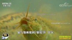[科技苑]健美泥鳅养成记