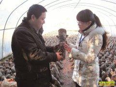 大棚杏鲍菇栽培技术要点