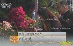 [农广天地]杜鹃花盆栽造型技术视频