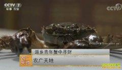[农广天地]安徽芜湖返乡青年陶汉平养螃蟹年销千万