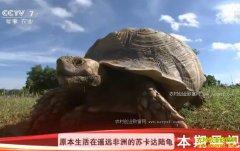 [科技苑]海南陵水:嚼鱼骨 吃臭果 奇招养殖陆龟