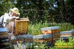 今年养蜂前景怎样?2018年蜂产品市场行情分析