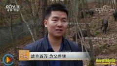[农广天地]陕西白河县周俊养殖野猪经营农家乐年销300万元