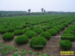 未来苗木产业发展的五大方向