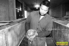 重庆秀山黄修建养竹鼠3年只损失了1只年赚十多万