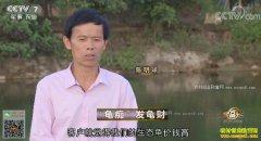 """[致富经]海南屯昌""""龟痴""""陈明球养龟发龟财"""