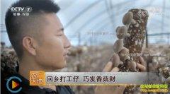 [农广天地]河北平泉打工仔齐彦斌返乡创业种植香菇巧发财