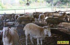 哪些中草药材能治疗羊腹泻?