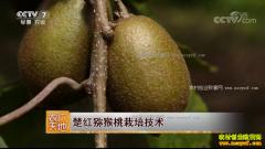 [农广天地]楚红猕猴桃栽培技术视频