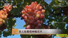 [农广天地]美人指葡萄栽培技术视频