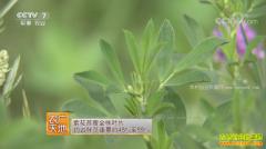 [农广天地]西藏紫花苜蓿种植技术视频