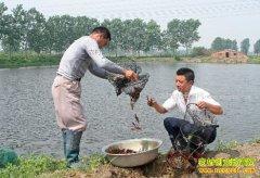 小龙虾市场火爆 专家建议养殖小龙虾要管控风险