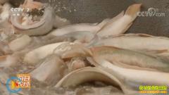 [每日农经]颜色发白的乌鱼好卖价格高