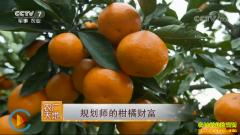[农广天地]上海规划师黄桂利的柑橘财富