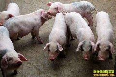 怎样提高仔猪成活率?