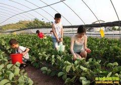 特色与个性化是休闲农业发展的关键