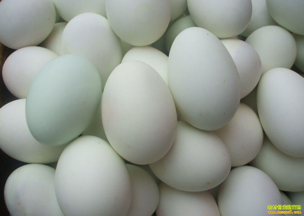 2019年全国鸭蛋价格行情