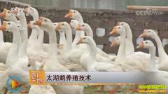 [农广天地]太湖鹅养殖技术视频